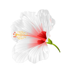Flower tropical plant  hibiscus white  on a white background  vintage vector illustration editable hand draw