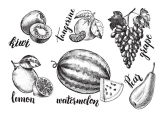 Ink hand drawn set of fruits - watermelon, grapes, kiwi fruit, tangerine, lemon, pear. harvest elements collection with brush calligraphy style lettering. Vector illustration.