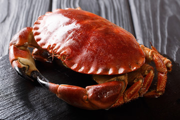 beautiful cooked brown crab close-up on a black background. horizontal