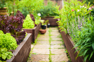 Vegetable garden with raised beds, focus on foreground Fototapete