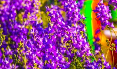 Purple and Violet Bloom