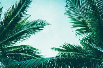 Wall Mural - Neat natural lawn palm trees vintage faded filter