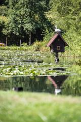 Ein Storch sitzt auf einem Haus im Fließ im Spreewald