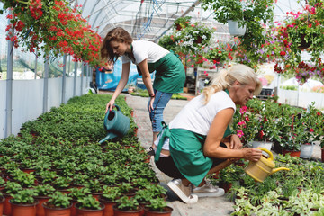 Watering plants at greenhouse