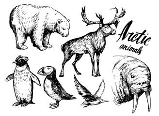 Set of arctic animals: reindeer, polar bear, walrus, penguin. Hand drawn vector illustration