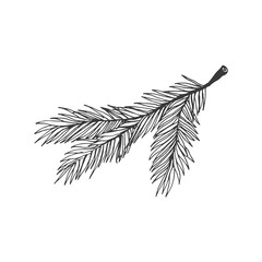 Christmas tree branch vector illustration isolated on white background. Hand drawn Christmas symbol. Doodle style.