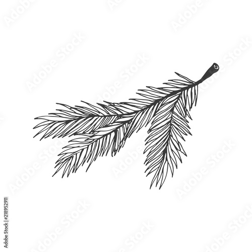 Christmas Branch Vector.Christmas Tree Branch Vector Illustration Isolated On White