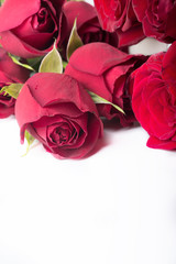 bouquet of red roses around white background