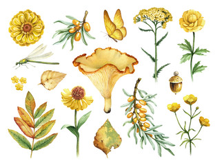 Watercolor illustrations of flowers, mushrooms and insects