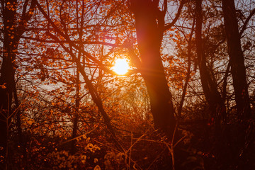 Sun shining through the trees on an autumn day