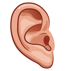 Vector ear on white background