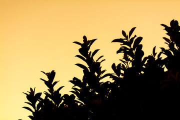 Silhouette of leaves on tree against sunset background