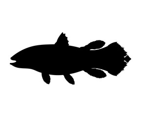 Latimeria fish silhouette living fossil prehistoric animal