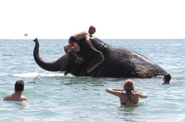 People watch a trainer and an elephant from a local circus bathing in the waters of the Black Sea in Yevpatoria