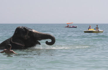 People watch an elephant from a local circus bathing in the waters of the Black Sea in Yevpatoria