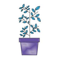 potted plant botanical nature decoration