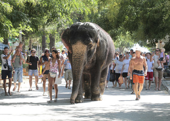 Trainers walk near an elephant from a local circus after bathing in the waters of the Black Sea in Yevpatoria