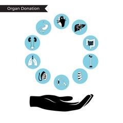 Vector illustration of donor organs