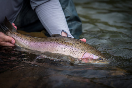Trout Fishing Catch and Release