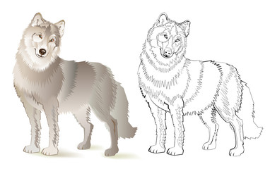 Colorful and black and white pattern for coloring. Drawing of cute wolf. Worksheet for children and adults. Vector image.
