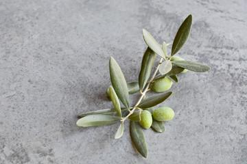 Obraz Gałązka oliwna na szarym tle. Oliwki - fototapety do salonu