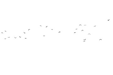 Flock of birds on a white background. For design..Flock of birds isolated on a white background. For multiply layer.