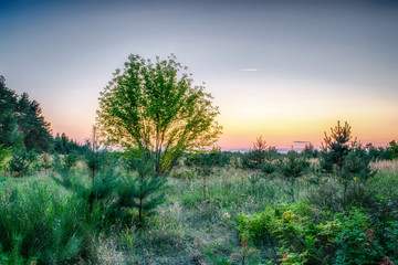 Pole z drzewami rozświetlone zachodzącym słońcem