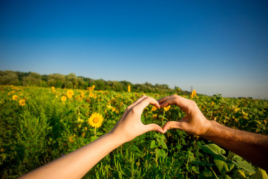 Couple hands in form of heart against sunflower landscape. Hands in shape of love heart - Love green energy