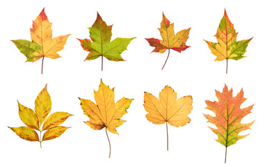 Colorful autumn leaves set isolated on white background Wall mural