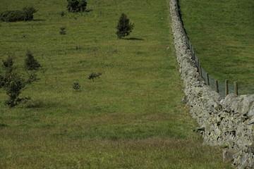 Wiese mit Steinmauer