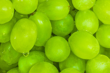 Detail of wet green wine grapes with a water drop