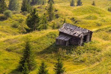 Old leaning wooden shed on a green meadow surrounded by trees