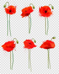 Wall Mural - Set of a red poppies flowers on transparent background. Vector.