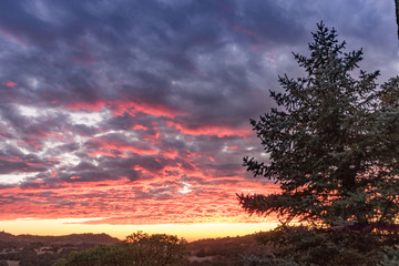 Vibrant pink, orange, yellow and lavender sunset, rural lanscape,, large pine tree, live oaks sunset sky