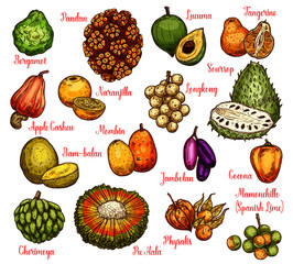 Isolated exotic fruits, vector sketch