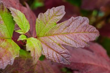 Rustic Autumn leaf with beautiful deep color, shape and design. Seasonal Fall image.