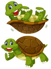 A set of happy turtle