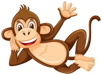 A cute monkey on white background