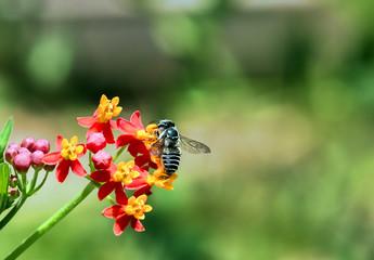 Bee Nectar