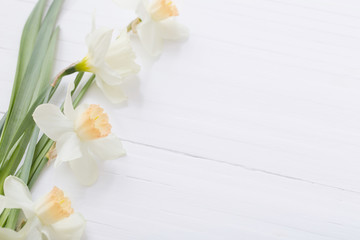 white narcissus on white wooden background