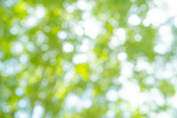 新緑・逆光・ぼかし