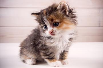 little kitten on a wooden background