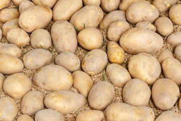 Patatas sobre cereal. Mercado de Carballino, Ourense, Galicia, España.