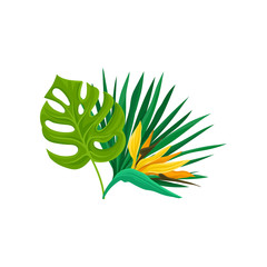 Green leaves of tropical palm tree and bird of paradise flowers vector Illustration on a white background