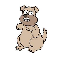 Smiling pug . funny pug