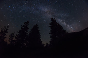 night photo. The Milky Way and the dark silhouettes of huge spruce trees against the starry sky.