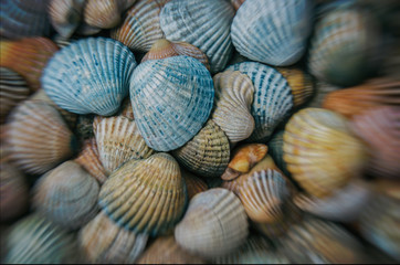 SHELLS - A collection of seashells on a sea beach