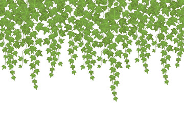 Green ivy wall climbing plant hanging from above. Garden decoration vector background Wall mural