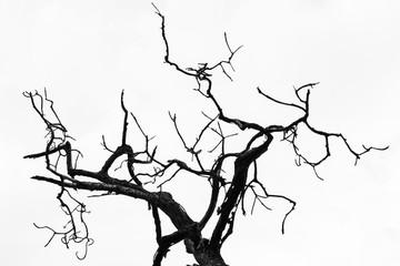Minimalist tree silhouette
