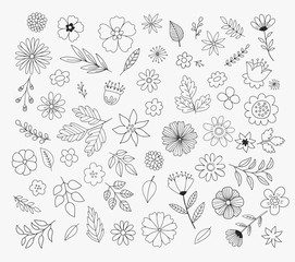 Hand Drawn Floral Design Elements. Doodle flower vector illustration.